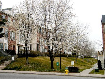 [Flowering trees at Society Hill townhouse complex]